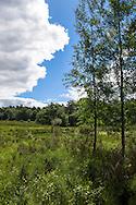 Europa, Deutschland, Nordrhein-Westfalen, Troisdorf, Birken in der Wahner Heide. - <br /> <br /> Europe, Germany, Troisdorf, North Rhine-Westphalia, birch trees in the Wahner Heath.
