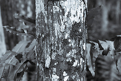 tree trunk covered in fungus in The Everglades