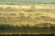 Aerials over the  Letea forest, Danube delta rewilding area, Romania