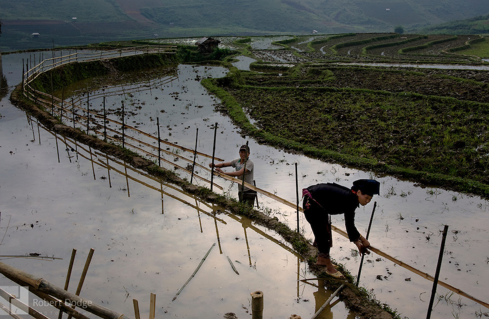A man and woman make repairs to the fence around a rice paddy in North Vietnam. The paddy has been flooded as preparation for planting rice seedlings. Robert Dodge, a Washington DC photographer and writer, has been working on his Vietnam Unexpected project since 2005. The project has taken him throughout Vietnam, including Hanoi, Ho Chi Minh City (Saigon), Nha Trang, Mue Nie, Phan Thiet, the Mekong, Sapa, Ninh Binh and the Perfume Pagoda. His images capture scenes and people from women in conical hats planting rice along the Red River in the north to men and women working in the floating markets one the Mekong River and its tributaries. Robert's project also captures the traditions of ancient Asia in the rural markets, Buddhist Monasteries and the celebrations around Tet, the Lunar New Year. Also to be found are images of the emerging modern Vietnam, such as young people eating and drinking and embracing the fashions and music of the west. Robert Dodge, a Washington DC photographer and writer, has been working on his Vietnam Unexpected project since 2005. The project has taken him throughout Vietnam, including Hanoi, Ho Chi Minh City (Saigon), Nha Trang, Mue Nie, Phan Thiet, the Mekong, Sapa, Ninh Binh and the Perfume Pagoda. His images capture scenes and people from women in conical hats planting rice along the Red River in the north to men and women working in the floating markets one the Mekong River and its tributaries. Robert's project also captures the traditions of ancient Asia in the rural markets, Buddhist Monasteries and the celebrations around Tet, the Lunar New Year. Also to be found are images of the emerging modern Vietnam, such as young people eating and drinking and embracing the fashions and music of the West.