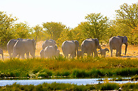 A herd of elephants on the move with a watering hole in the foreground, Etosha National Park, Namibia