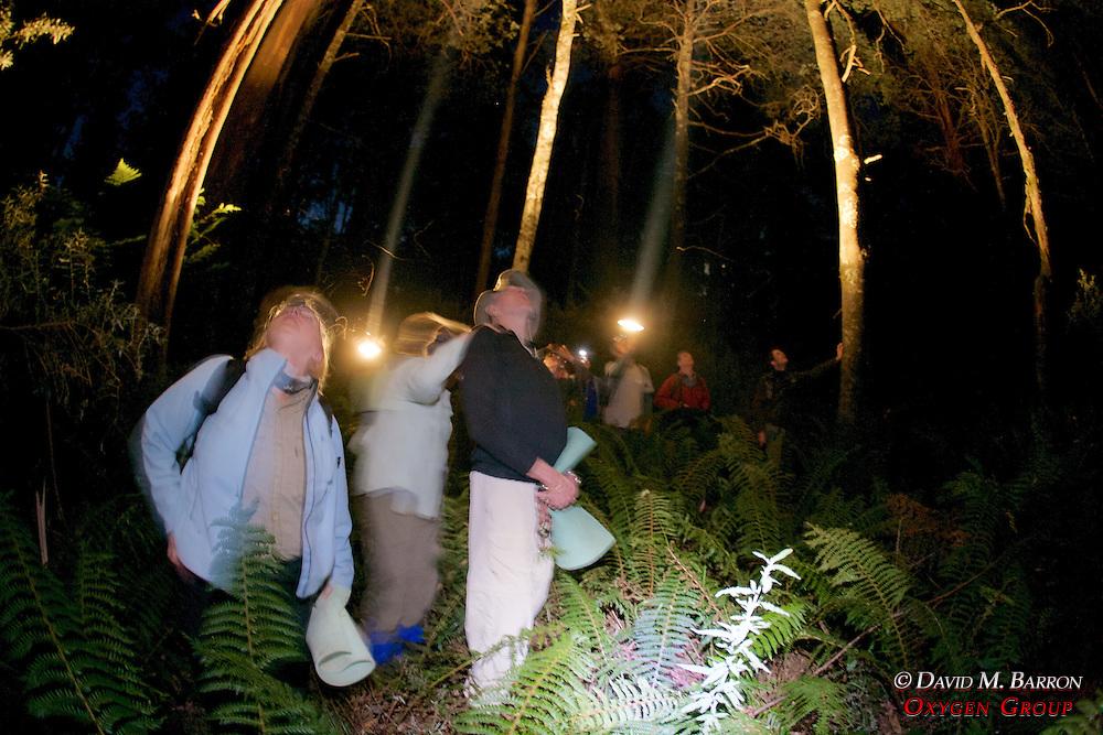 Spotlighting For Animals