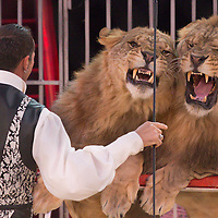 Lion trainer Redy Montico of Italy performs in the new show titled Balance in Circus Budapest in Budapest, Hungary on October 04, 2015. ATTILA VOLGYI