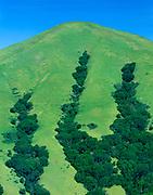 Black Mountain in Spring,Marin County, California