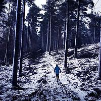 Runner in Scottish Borders forest.Photograph David Cheskin.