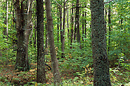 Local wood