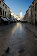 Pigeon walking on Sradun (Placa), main thoroughfare of Dubrovnik old town, Croatia