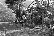 Traditional houses are composed of a single room with the fire pit at one end and living space at the other. One or two sides are closed with walls of bamboo or other wood. Walls offer some privacy but by leaving half of the house open, breezes serve to cool the house and keep insects from congregating. The roofs are made of thatch.