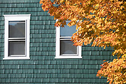 Traditional painted cedar shingle home and Maple tree in Fall color in Newport, Rhode Island, USA