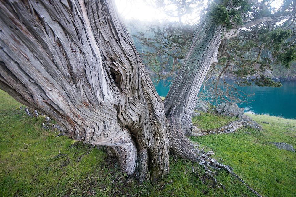 Faces in the wood, on San Juan Island, Washington.