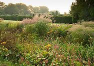 Persicaria affinis, Stipa giganta Eupatorium purpurea and Yew hedge at sunrise in Waterperry Gardens, Waterperry, Wheatley, Oxfordshire, UK
