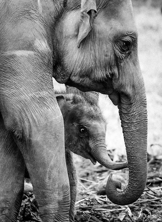 Mother elephant with her baby.