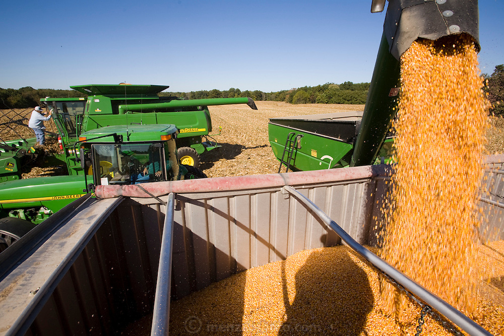 Grain Farmer Gordon Stine (far left) and his brother harvest corn with his John Deere eight-row combine on leased land in St. Elmo, Illinois.   (Gordon Stine is featured in the book What I Eat; Around the World in 80 Diets.)