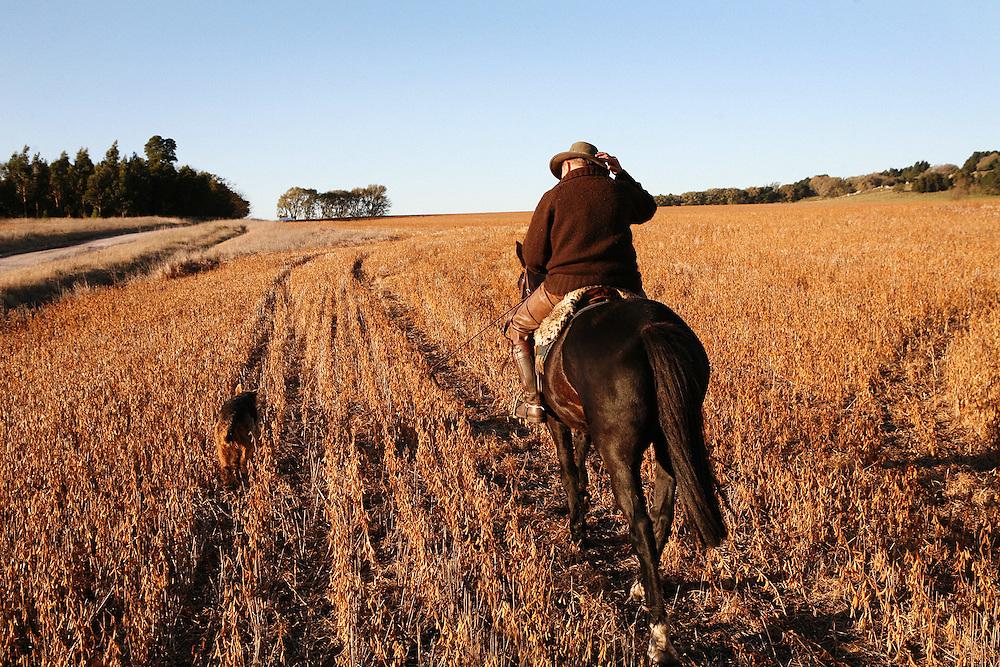 "Soya bean field at ""Siempre Verde"", an estancia in Tandil, Argentina"