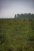 Raised bog covered in low clouds and light haze after the rain, near Mētriena, Vidzeme, Latvia Ⓒ Davis Ulands | davisulands.com