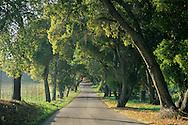 Afternoon light along oak tree shaded rural road, Vineyard Drive, Paso Robles San Luis Obispo County, California