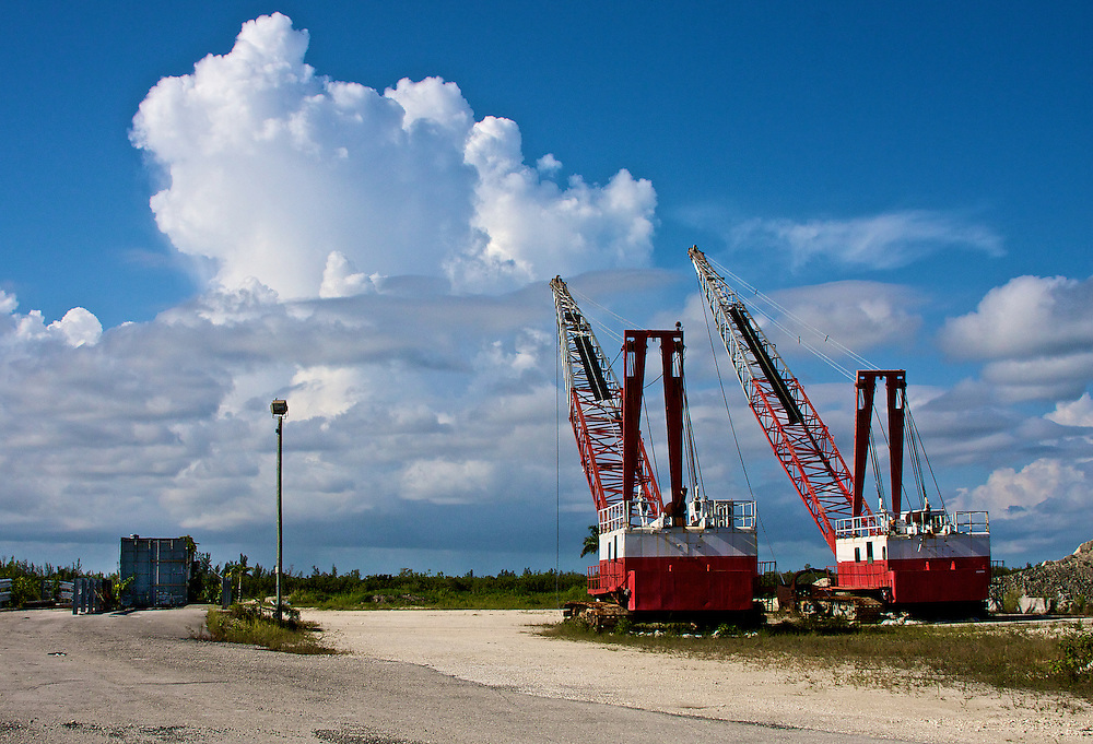 Waiting Cranes, Homestead, FL
