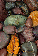 Colorful river rocks along the Middle Fork of the Flathead River in Glacier National Park, Montana, USA