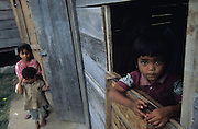 Batak children play near traditional houses close to lake Toba..Batak Indigenous Christian people living on Samosir Island and nearby Lake Toba in Indonesia. There are some 6 million Christian Batak in Indonesia, the world's largest Muslim country of 237 million people, which has more Muslims than any other in the world. Though it has a long history of religious tolerance, a small extremist fringe of Muslims have been more vocal and violent towards Christians in recent years. ..Batak religion is found among the Batak societies around Lake Toba in north Sumatra. It is ethnically diverse, syncretic, liable to change, and linked with village organisations and the monotheistic Indonesian culture. Toba Batak houses are boat-shaped with intricately carved gables and upsweeping roof ridges, and Karo Batak houses rise up in tiers. Both are built on piles and are derived from an ancient Dong-Son model. The gable ends of traditional houses, Rumah Bolon or Jabu, are richly decorated with the cosmic serpent Naga Padoha carved in wood or in mosaic, lizards, double spirals, female breasts, and the head of the singa, a monster with protruding eyes that is part human, part water buffalo, and part crocodile or lizard. The layout of the village symbolises the Batak cosmos. They cultivate irrigated rice and vegetables. Irrigated rice cultivation can support a large population, and the Toba and the Karo live in densely clustered villages, which are limited to around ten homes to save farming land. The kinship system is based on marriage alliances linking lineages of patrilineal clans called marga. In the 1820's Islam came to the southern Angkola and Mandailing homelands, and in the 1850's and 1860's Christianity arrived in the Angkola and Toba region with Dutch missionaries and the German Rheinische Mission Gesellschaft. The first German missionary caused the Dutch to stop Batak communal sacrificial rituals and music, which was a major blow to the traditional religion. Dutch colonial p