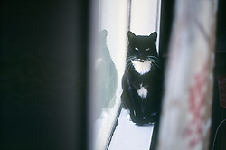 Zuzu the cat sits in the window of her Oakland, Calif. home, Friday, Aug. 2, 2013. (Photo by D. Ross Cameron)