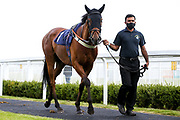 Costello ridden by Daniel Muscutt and trained by Mike Murphy - Mandatory by-line: Robbie Stephenson/JMP - 18/07/2020 - HORSE RACING- Bath Racecourse - Bath, England - Bath Races 18/07/20