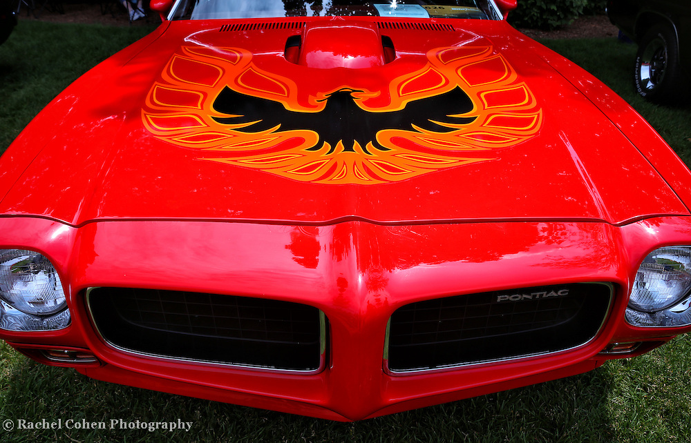 """""""Light My Fire""""<br /> <br /> 1973 Pontiac Firebird Trans Am!!<br /> An awesome view of a cool All American Classic Muscle Car!!<br /> Full on front and hood view!!<br /> <br /> Cars and their Details by Rachel Cohen"""