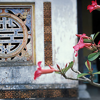 Asia, Vietnam, Hué, Flowers blossom in The Citadel in the old Imperial Enclosure