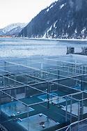 Alaska SeaLife Center i Seward, Alaska, där den finska marinbiologen Tuula Hollmen forskar på klimatförändringarnas påverkan på det marina livet i området. Under denna tid har hon med egna ögon kunnat se hur glaciärerna smälter och ekosystemen rubbas.A