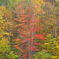 A fiery display of autumn color blankets the woods of southern Vermont.