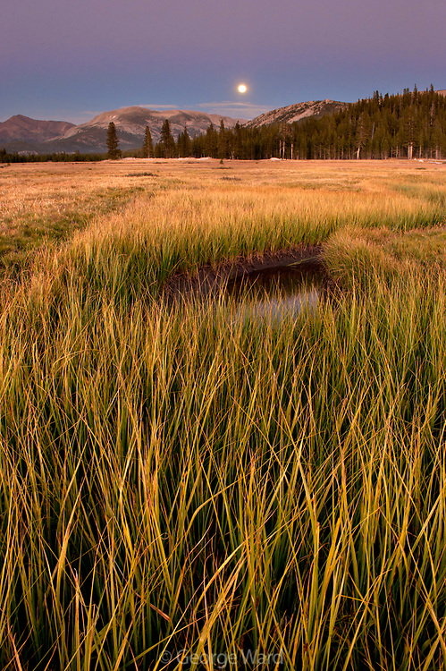 Tuolumne Meadws, Grasses, and Rising Full Moon,Yosemite National Park, California