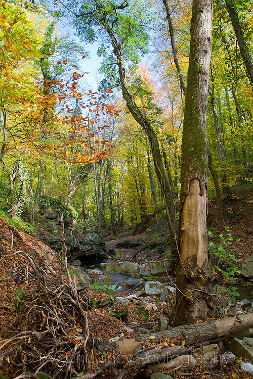 Vitanovo reserve