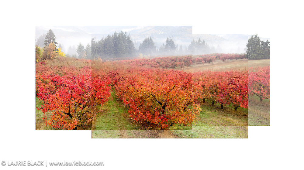 Colorful fall orchard landscape in Columbia Gorge fine art photograph collage