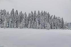 THEMENBILD - Tief verschneite Landschaft rund um den Schwarzsee, aufgenommen am 10. Jänner 2019, Kitzbuehel, Oesterreich // Deep snowy landscape around the Schwarzsee at Kitzbuehel, Austria on 2019/01/10. EXPA Pictures © 2019, PhotoCredit: EXPA/ Stefan Adelsberger