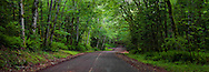 A rural country Kitsap County road in a Big Leaf Maple and Red Alder deciduous forest on the Kitsap Peninsula in Puget Sound, Washington state, USA.