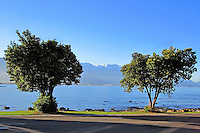 Shoreline, Kaikoura, South Island, New Zealand, 201004090068 ..Copyright Image from Victor Patterson, 54 Dorchester Park, Belfast, United Kingdom, UK. Tel: +44 28 90661296. Email: victorpatterson@me.com; Back-up: victorpatterson@gmail.com..For my Terms and Conditions of Use go to www.victorpatterson.com and click on the appropriate tab.