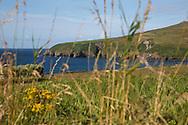 Fields and cliffs near Dingle, County Kerry, Ireland