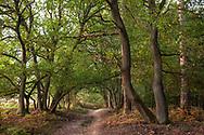 forest path in the Wahner Heath on Telegraphen hill, Troisdorf, North Rhine-Westphalia, Germany.<br /> <br /> Waldweg in der Wahner Heide am Telegraphenberg, Troisdorf, Nordrhein-Westfalen, Deutschland.