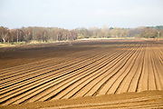 Rows made in sandy soil in field prepared for cultivation, Suffolk Sandlings landscape, Butley, Suffolk, England, UK