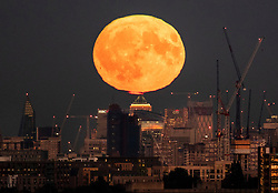 © Licensed to London News Pictures. 24/09/2018. London, UK. The near full Harvest moon appears to touch the top of Canary Wharf as it rises over London. It is named the Harvest Moon as it is the nearest full moon to the autumnal equinox as the last of the harvest is brought in. This state of the moon, waxing gibbous, is 98. 7% of tomorrow's full moon. Photo credit: Peter Macdiarmid/LNP