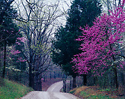 Houchins Ferry Road winding through spring forest with blooming dogwoods and redbuds, Mammoth Cave National Park, Kentucky.