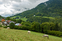 Horses graze above a farm in the foothills of the French Alps.