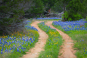 Country road in the Texas Hill Country east of Llano, Texas, line by bluebonnets