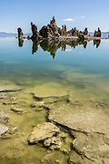 An intriguing island of tufa towers reflect in alkaline waters colored with yellow algae at South Tufa Area, in Mono Lake Tufa State Natural Reserve, Lee Vining, California, USA. The Reserve protects wetlands that support millions of birds, and preserves Mono Lake's distinctive tufa towers -- calcium-carbonate spires and knobs formed by interaction of freshwater springs and alkaline lake water. Mono Lake has no outlet and is one of the oldest lakes in North America. Over the past million years, salts and minerals have washed into the lake from Eastern Sierra streams and evaporation has made the water 2.5 times saltier than the ocean. This desert lake has an unusually productive ecosystem based on brine shrimp, and provides critical nesting habitat for two million annual migratory birds that feed on the shrimp and blackflies. Since 1941, diversion of lake water tributary streams by the city of Los Angeles lowered the lake level, which imperiled the migratory birds. In response, the Mono Lake Committee won a legal battle that forced Los Angeles to partially restore the lake level.