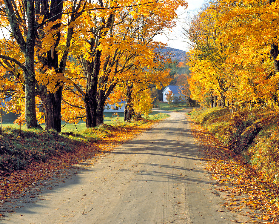 A tree-lined road leads into Ryegate Corner in Vermont.