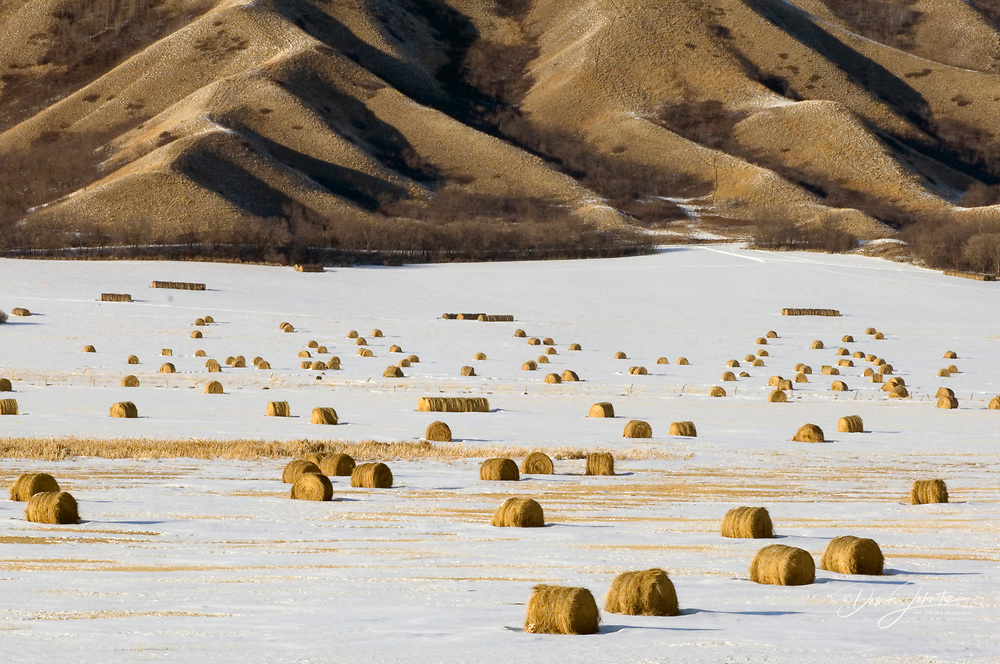 Qu'Appelle River Valley with light snow and hay bales, Grenfell, Saskatchewan, Canada