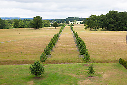 View of the Lime Tree walk from the roof at Hanbury Hall