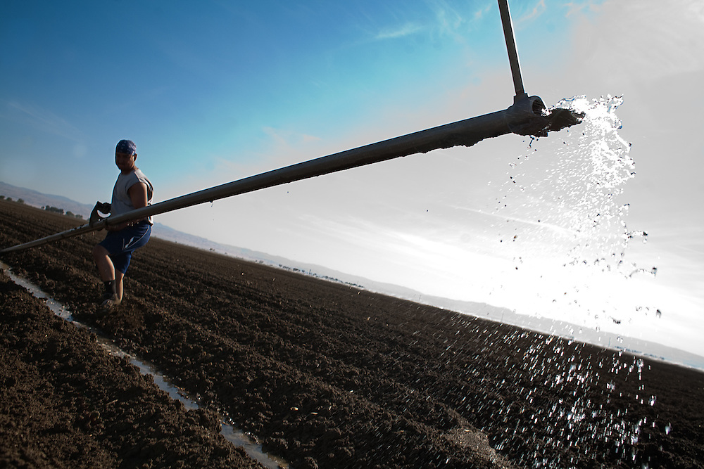 Farm laborers move sprinkler piping in the San Joaquin Valley.  Nearby communities such as Firebaugh and Mendota have 40% documented unemployment due to reduced water allocations to farmers fields.