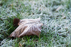 © Licensed to London News Pictures. 13/12/2018. Sidcup, UK. A frozen leaf at Footscray Meadows in Sidcup this morning. With snow forecast for this weekend in parts of the UK temperatures dropped over night to freezing conditions.Photo credit: Grant Falvey/LNP