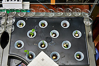 AeroGarden Farm 06-Right. Positions 1-3 Sweet Snap Peas, Positions 04-12 Snow Peas. Image taken with a Leica TL-2 camera and 35 mm f/1.4 lens (ISO 640, 35 mm, f/8, 1/30 sec).