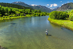 A fly-fisherman throwing a tight loop to a waiting brown trout on the East Rosebud River in Southwest Montana.
